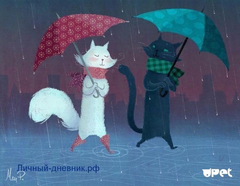 Котики под зонтиками