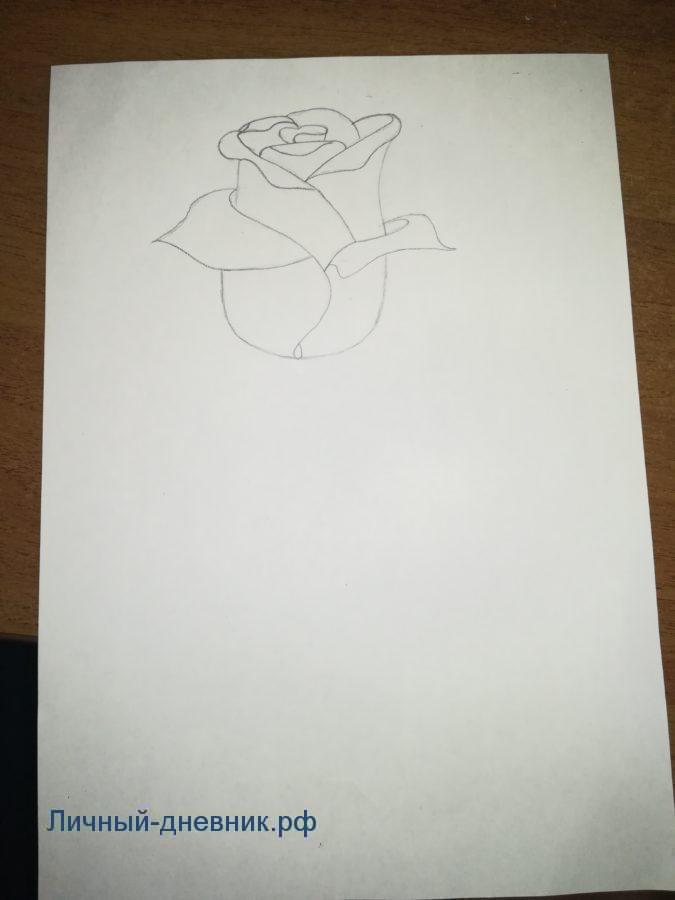 Как нарисовать розу Поэтапно Карандашом