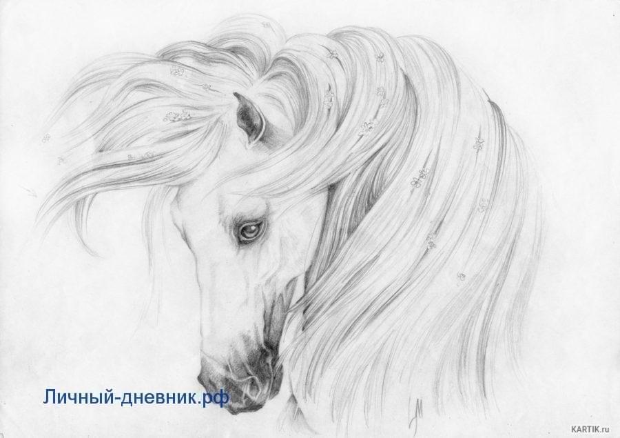 Красивые рисунки для срисовки карандашом