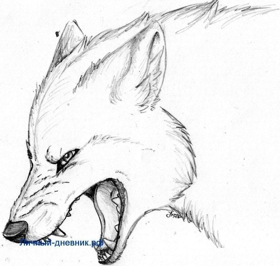 Картинки для срисовки карандашом красивые животные