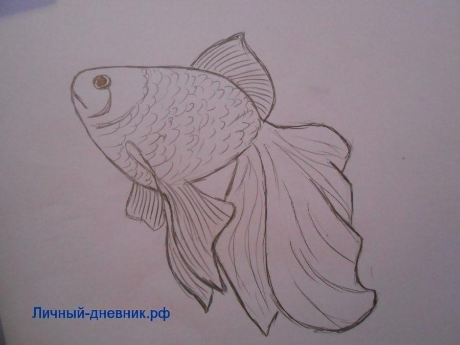 нарисовать золотую рыбку карандашом поэтапно для начинающих