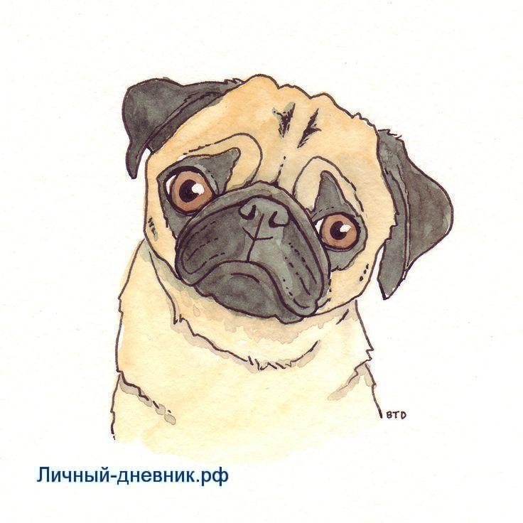 Картинки Мопсов для срисовки