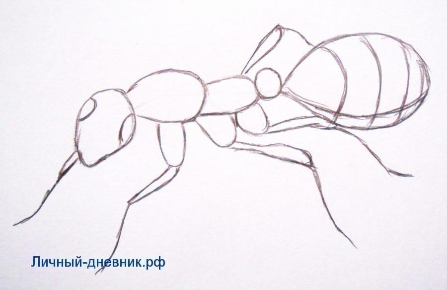 Рисуем муравья поэтапно для детей