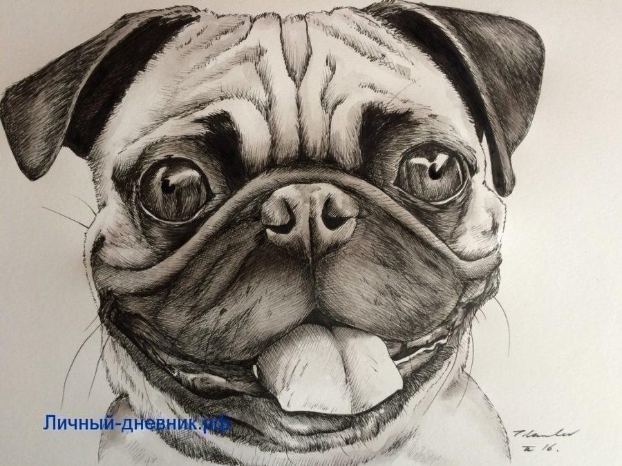 Картинки смешных собак для срисовки, серебряную свадьбу лет