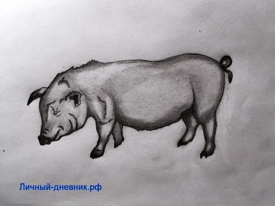 Как нарисовать желтую земляную свинью символ 2019 года.